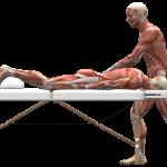 Comment se déroule une séance d'ostéopathie ? Combien de temps je prévois ? quelle est le prix ? Faut-il se déshabiller ? Va-t-on me manipuler ? Est-ce douloureux ? La consultation en ostéopathie se déroule en deux temps.